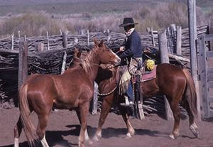 Martin working colts at Red House Camp. In time Jose Gonzalez and Steve Nelson got them saddled, got on and rode them with nothing on their heads. Photo by Jay Dusard 1982