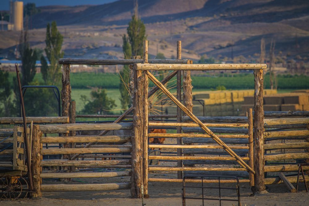 open the gate welcome to martin black horsemanship