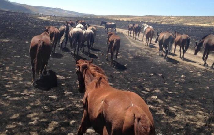 saving the horses