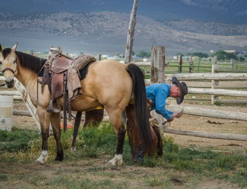 Hoof Care and Horsemanship ~ Do they go together?