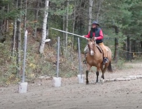 Versatility, Trail Riding, Natural Obstacles
